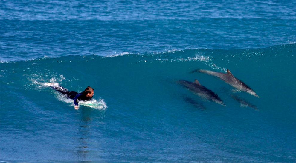 Delfines que también surfean