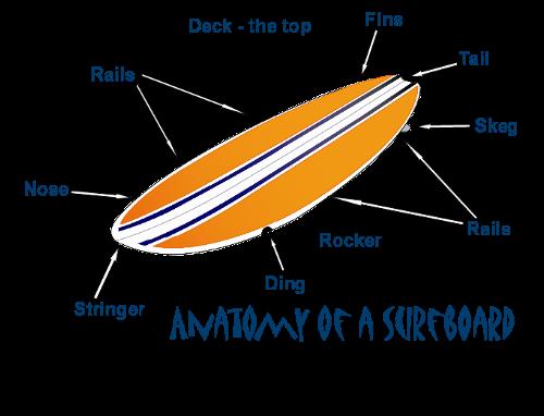 AnatomySurfboard3